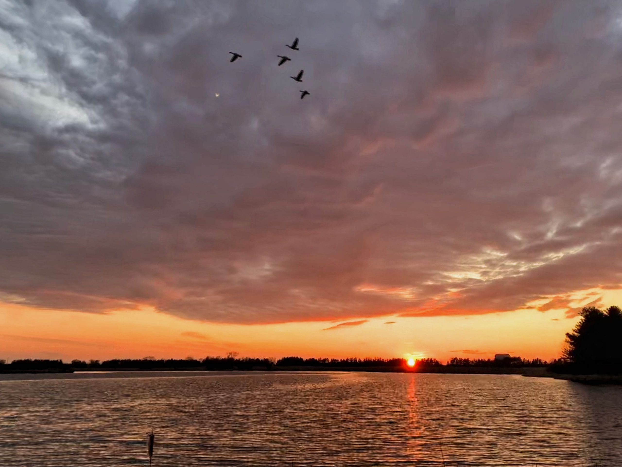 Geese cross the sky full of evening clouds, the color of molten gold, as the sun sets over Lake Law. nature, landscape, sunset, sky, cloud, sun, water, lake, Lake Law, wildlife, bird, goose, animal Photo: Sudeshna Ganguly