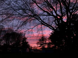An intensely pink sunset is captured from the Fermilab Village on April 8. sunset, sky, cloud, tree, nature, landscape Photo: Maria Martinez Casales