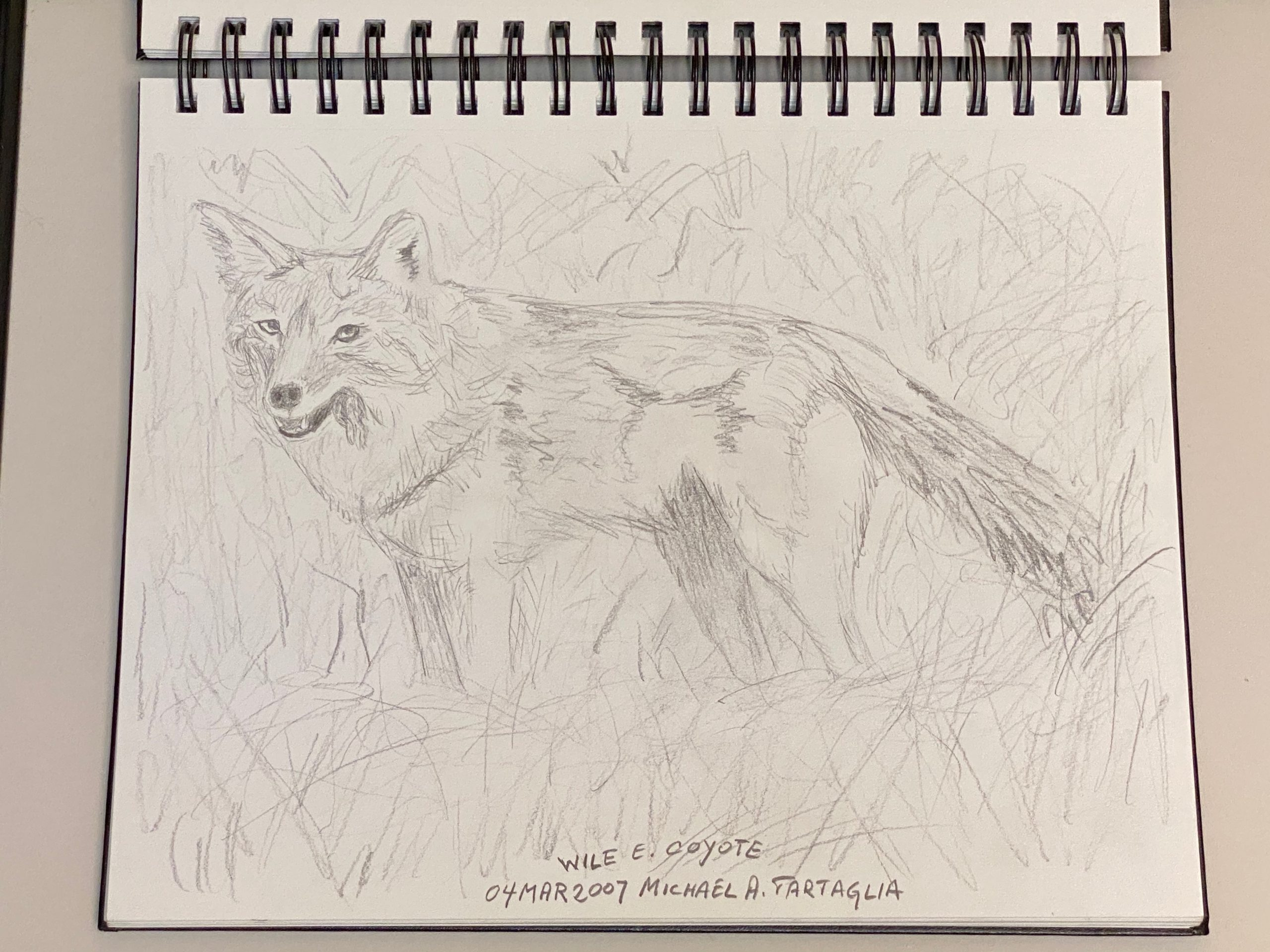 """A recent coyote Photo of the Day triggered the artist's memory another photo, published in the former Fermilab Today in 2007, by <a href=""""https://www.fnal.gov/pub/today/images/images07/FridayLunch.jpg"""">Greg Vogel</a>. It inspired this quick sketch way back then. Hey kids, get out your colored pencils! art, wildlife, animal, mammal, coyote Drawing: Michael Tartaglia"""