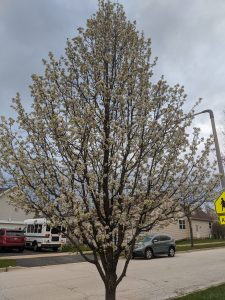 Maddie Schoell captures a first bloom on Earth Day. tree, plant, nature Photo: Maddie Schoell