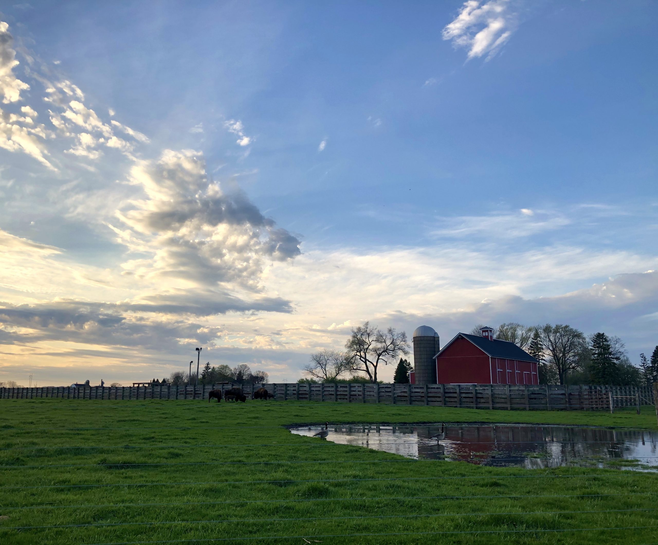 It's a majestic day for a majestic animal. nature, landscape, wildlife, animal, mammal, bison, sky, cloud, barn, building Photo: Maria Martinez Casales