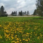 The bike path along Road D offers a flowery view on May 14. nature, landscape, plant, flower, tree, sky, prairie, grass Photo: Maria Emilia Ruiz