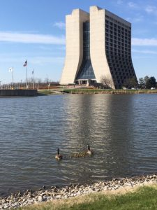 This was snapped on the morning of April 27. Sunshine, goslings — these are good signs that spring is here. nature, landscape, building, Wilson Hall, wildlife, animal, bird, goose, water, pond Photo: Laurie Pederson