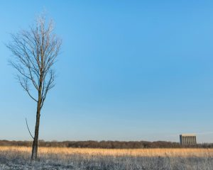On a clear February day, the high-rise stands small as seen from from the Margaret Pearson Interpretive Trail. nature, landscape, winter, sky, prairie, Wilson Hall, building, grass, plant, tree Photo: Maria Emilia Ruiz