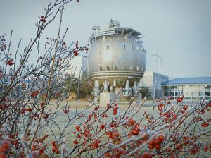The frosted berries pop out against the wintry neutrals of the bubble chamber. nature, landscape, bubble chamber, berry, winter Photo: Leticia Shaddix
