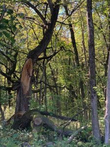 The trees by B Road are a lovely place to explore. nature, landscape, tree, woods Photo: Spring Barrett