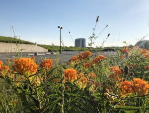 Flowers are bright, beautiful and bountiful on the lab grounds. nature, landscape, flower, plant, prairie, Wilson Hall, building Photo: