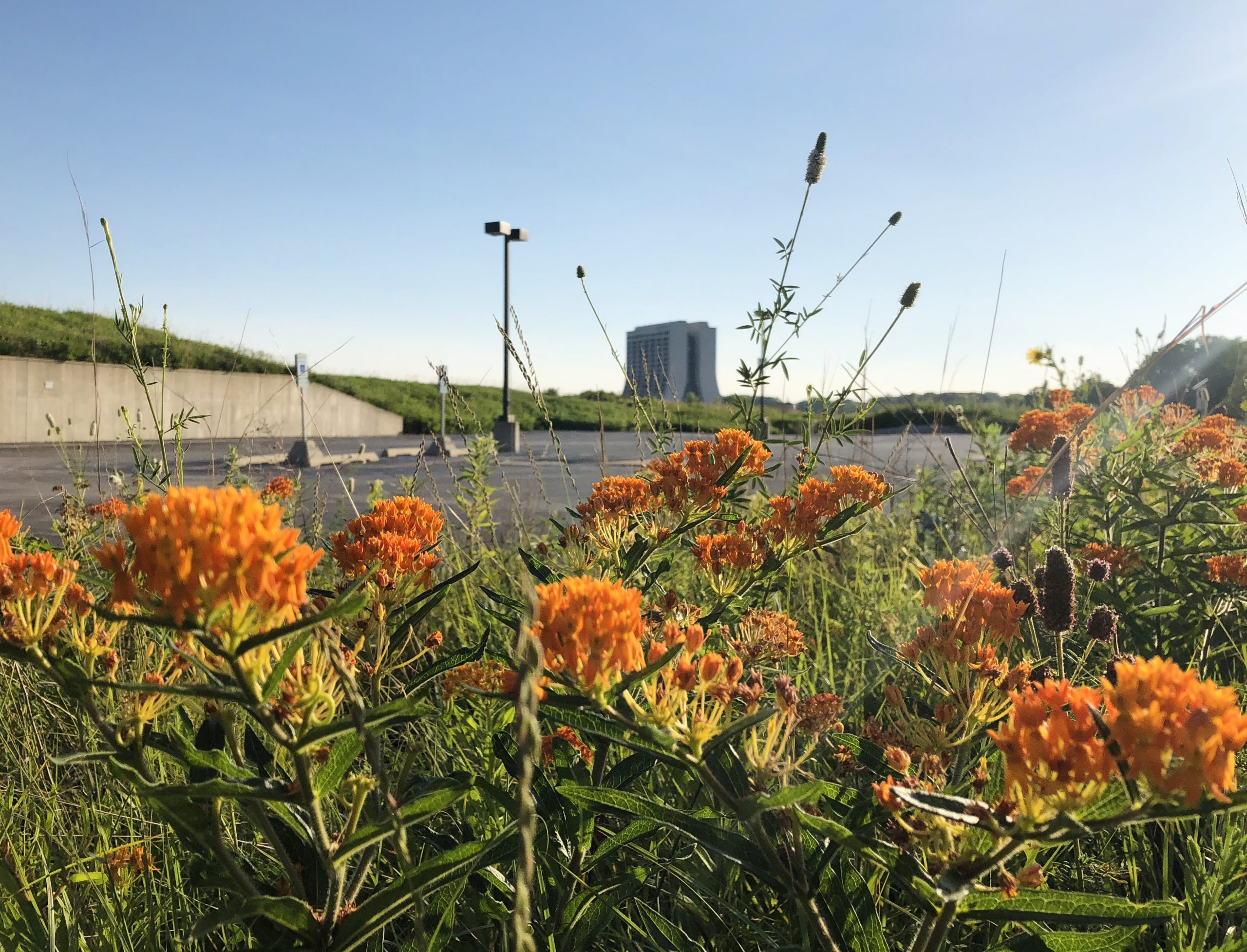 Flowers are bright, beautiful and bountiful on the lab grounds. nature, landscape, flower, plant, prairie, Wilson Hall, building Photo: Maria Martinez Casales