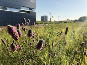 Occasionally stop to appreciate the lab's natural and built environment. nature, landscape, prairie, plant, flower, Wilson Hall, IARC, building Photo: Maria Martinez Casales