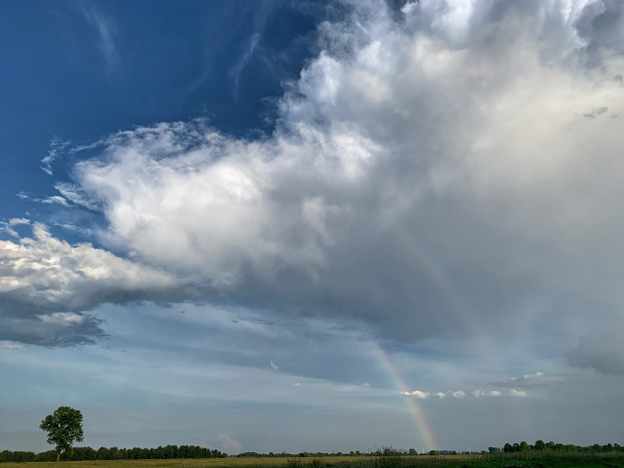 Just after a recent rain, an expansive scene emerges: a majestic blue sky, beautiful cloud formation, rainbow and lonely tree near the Fermilab Village. nature, landscae, sky, rain, cloud, rainbow, plant, tree Photo: Sudeshna Ganguly