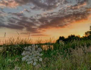 This sunset view over Lake Law was taken from the Fermilab Village.nature, landscape, sky, cloud, sunset, prairie, plant, grass Photo: Sudeshna Ganguly