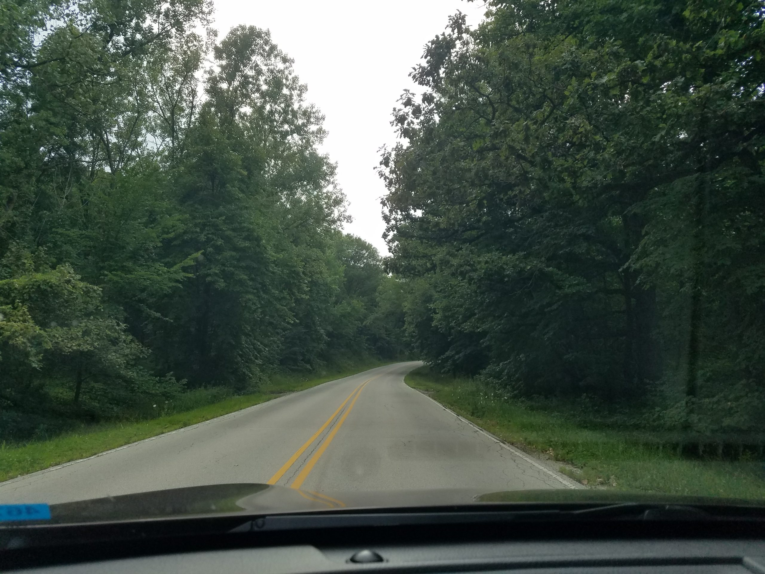 Road B is green on July 29. This was taken northwest of Phillips Farm Road, near Site 38. nature, landscape, woods, tree, plant, road Photo: Randall Ward