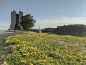 On Aug. 12, Wilson Hall is seen at the edge of summer and a field of bird's foot trefoil. nature, landscape, building, Wilson Hall, plant, flower, bird's foot trefoil, water, lake, pond Photo: Valerie Higgins