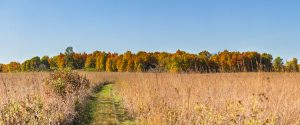 Captured on Oct. 2, this shows site 29 Woods South as viewed from the Pine Street prairie path. nature, landscape, autumn, prairie, woods, plant, tree, grass, fall Photo: Marty Murphy