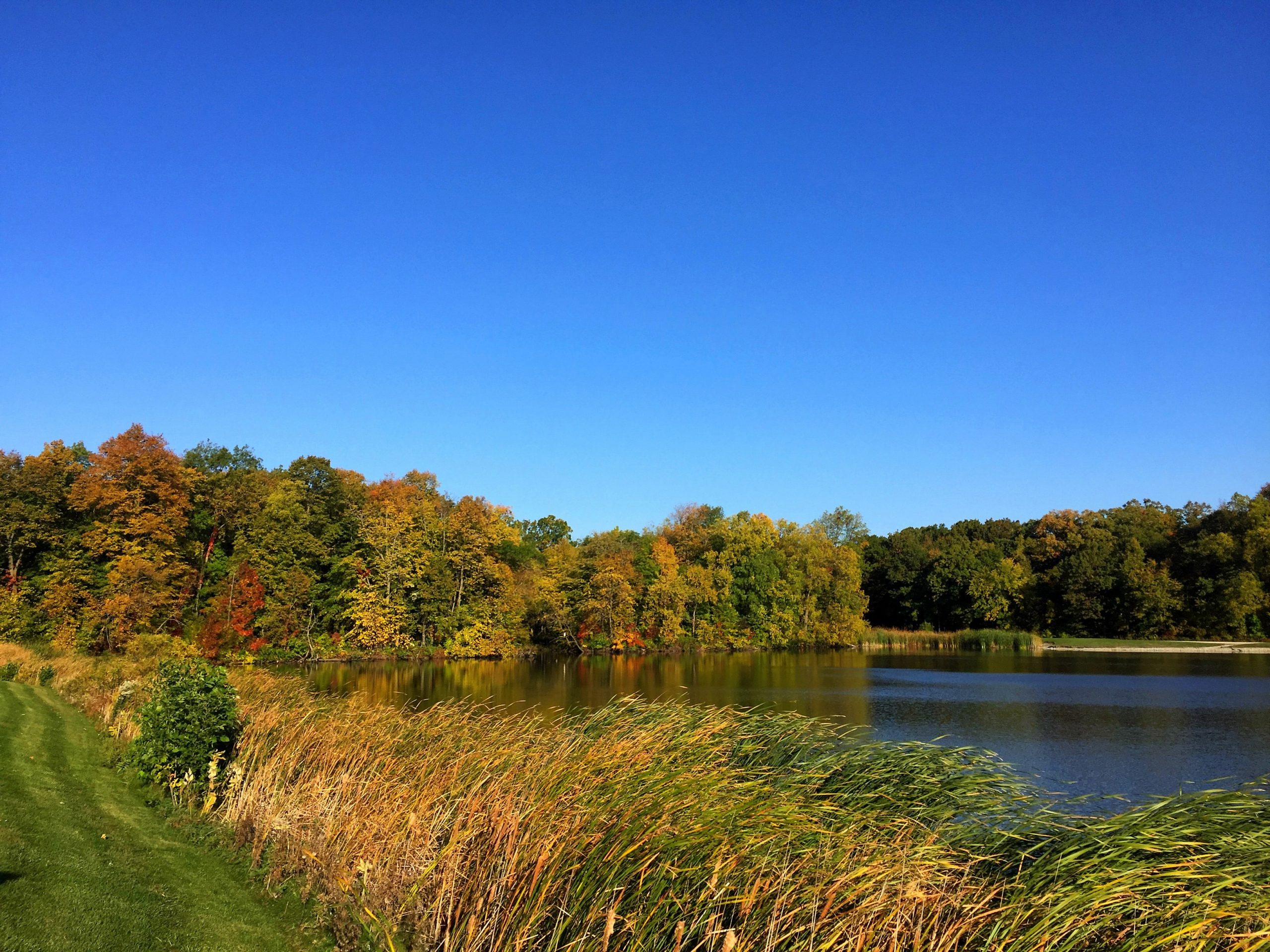 Bob Ross would be very happy to paint this scene, captured on Oct. 7. nature, landscape, sky, pond, water, autumn, fall, woods, tree Photo: Albert Dyer