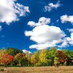 Blue sky, white clouds, and green, red, orange and yellow leaves showcase nature's rich palette on Oct. 4. nature, landscape, sky, cloud, woods, tree, autumn, fall, prairie Photo: Tim Chapman