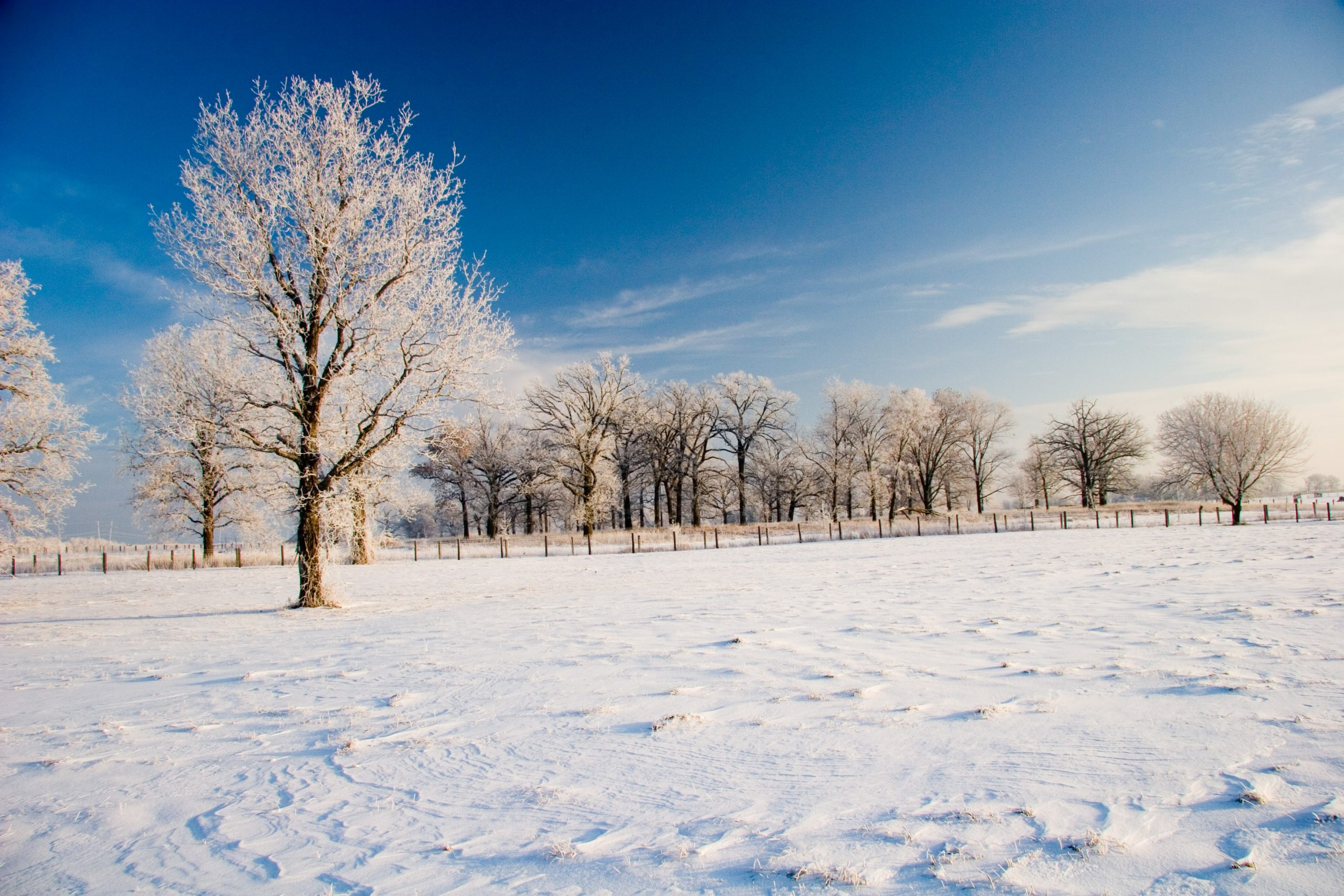 It's a frosty morning at the Industrial Building Complex on Dec. 22, 2005. nature, landscape, winter, snow, tree, woods, prairie, sky Photo: Tom Nicol