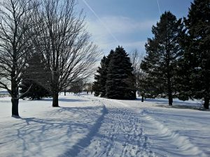 Branches and needles stand out against the snow along a path on campus. snow, tree, winter, campus, nature, Photo: Krzysztof Kompiel
