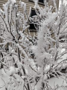 After the Jan. 4 chill, the weather made for this spiky hoarfrost in the trees the Batavia, Illinois, area. weather, frost, winter, snow, snowflakes, Batavia, nature Photo: Julian Badillo Rojas