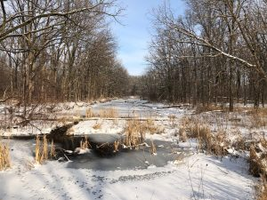 Looking north from the footbridge on a January day in 2020, bare trees reach toward a blue sky above a frozen creek covered in snow and small tracks. winter, tree, creek, nature, campus, snow, ice, sky Photo: Carl Lundberg