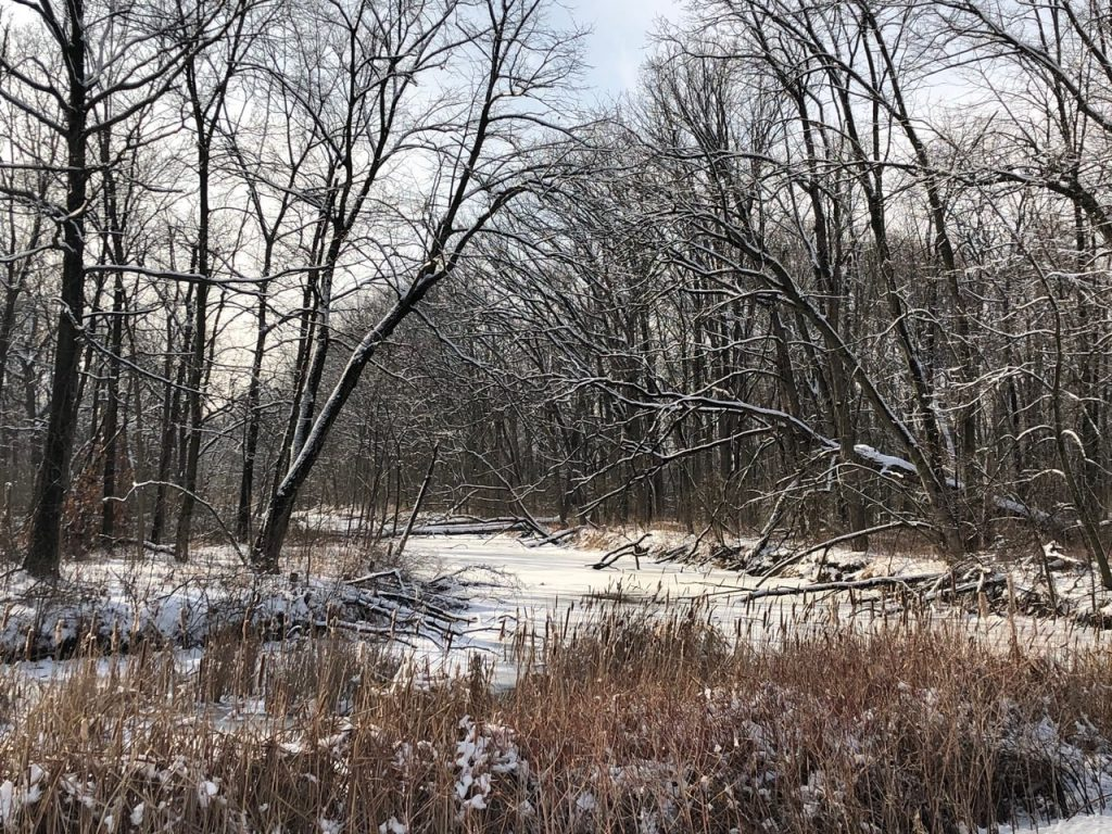 Looking South from Pine Street, snow covers trees, grasses, and the creek in January 2020. campus, snow, winter, water, tree, grass Photo: Carl Lundberg