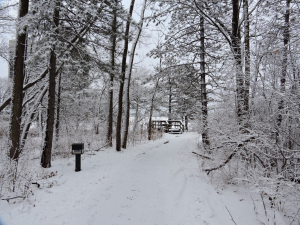 In January 2020, tracks stamp the snow that blankets a path and footbridge near Wilson Hall. campus, nature, winter, weather, snow, Wilson Hall, bridge, tree Photo: Richard Meaderdes, Jr.