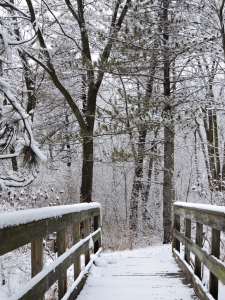 In January 2020, snow coats branches, needles and a footbridge on campus. snow, campus, nature, winter, weather, tree, bridge Photo: Richard Meaderdes, Jr.
