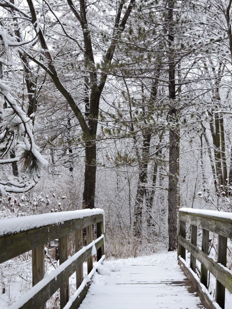 In January 2020, snow coats branches, needles and footbridge on campus. snow, campus, nature, winter, weather, tree, bridge Photo: Richard Meaderdes