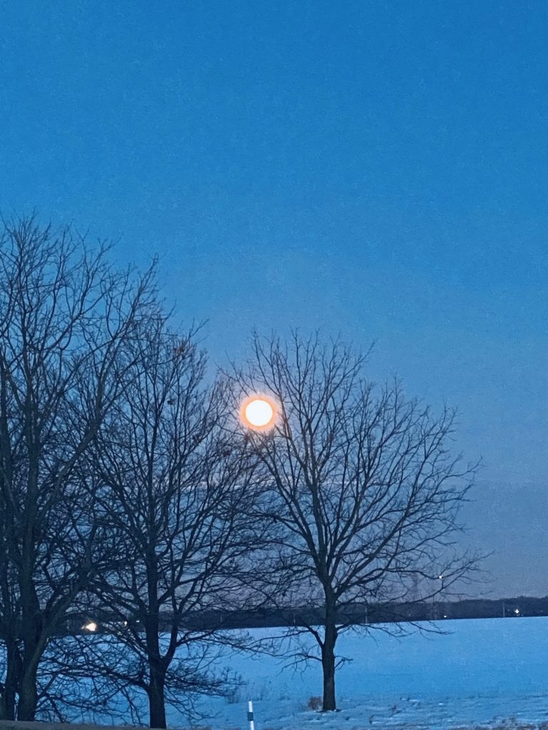 On Jan. 28, 2021, a full moon hangs above a white carpet of snow on the Fermilab campus. sky, moon, nature, tree, winter, snow, campus Photo: Sushmabhargavi Nimmalapalli