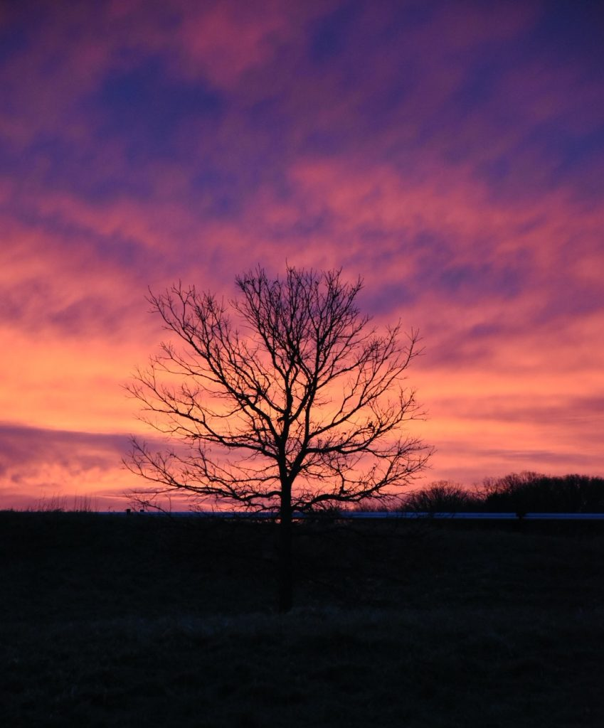 On March 15, 2021, a the silhouette of a tree stands contrasts with a neon sky across the road from AP30. sky, campus, tree, nature, landscape, sunrise Photo: Efrain Cortez