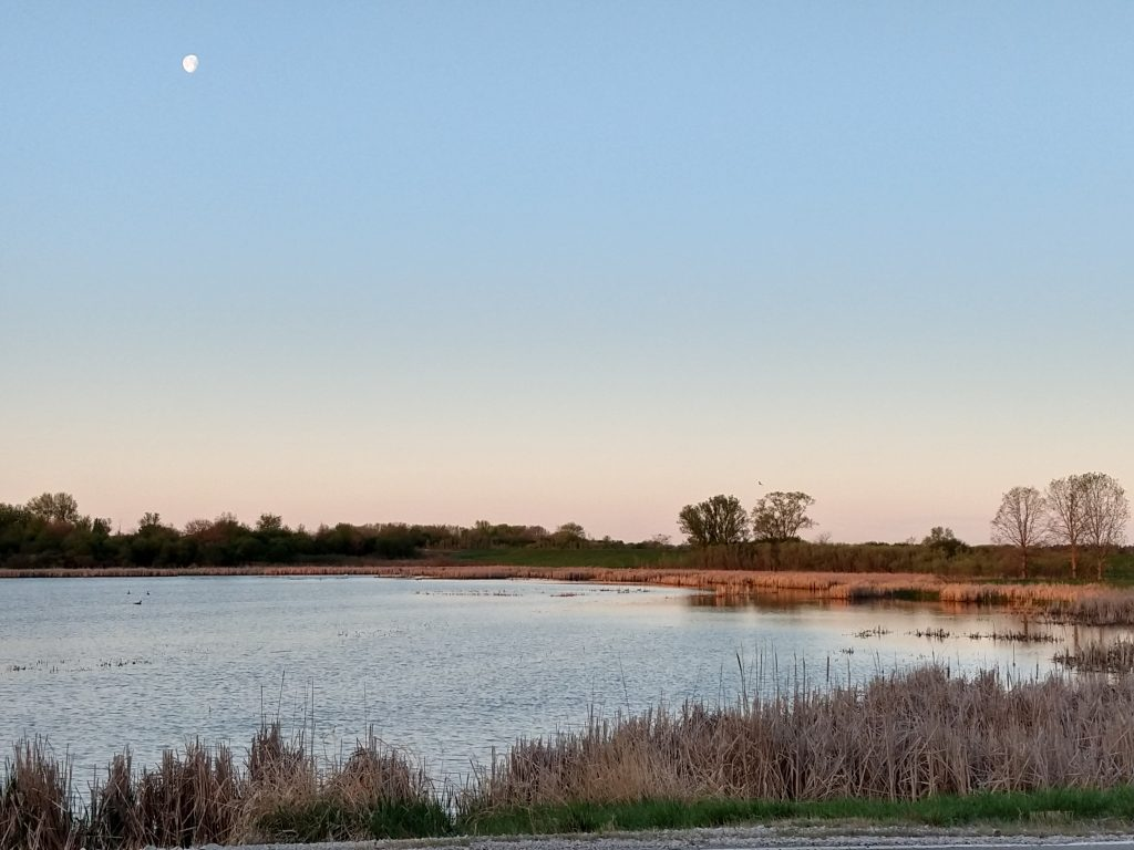 Blue sky, nearly full moon in the upper left corner of a photo. Near the horizon at the center of the photo, pinkish strip of sky. A wetland, surrounded by tan grasses with some trees in the distance.