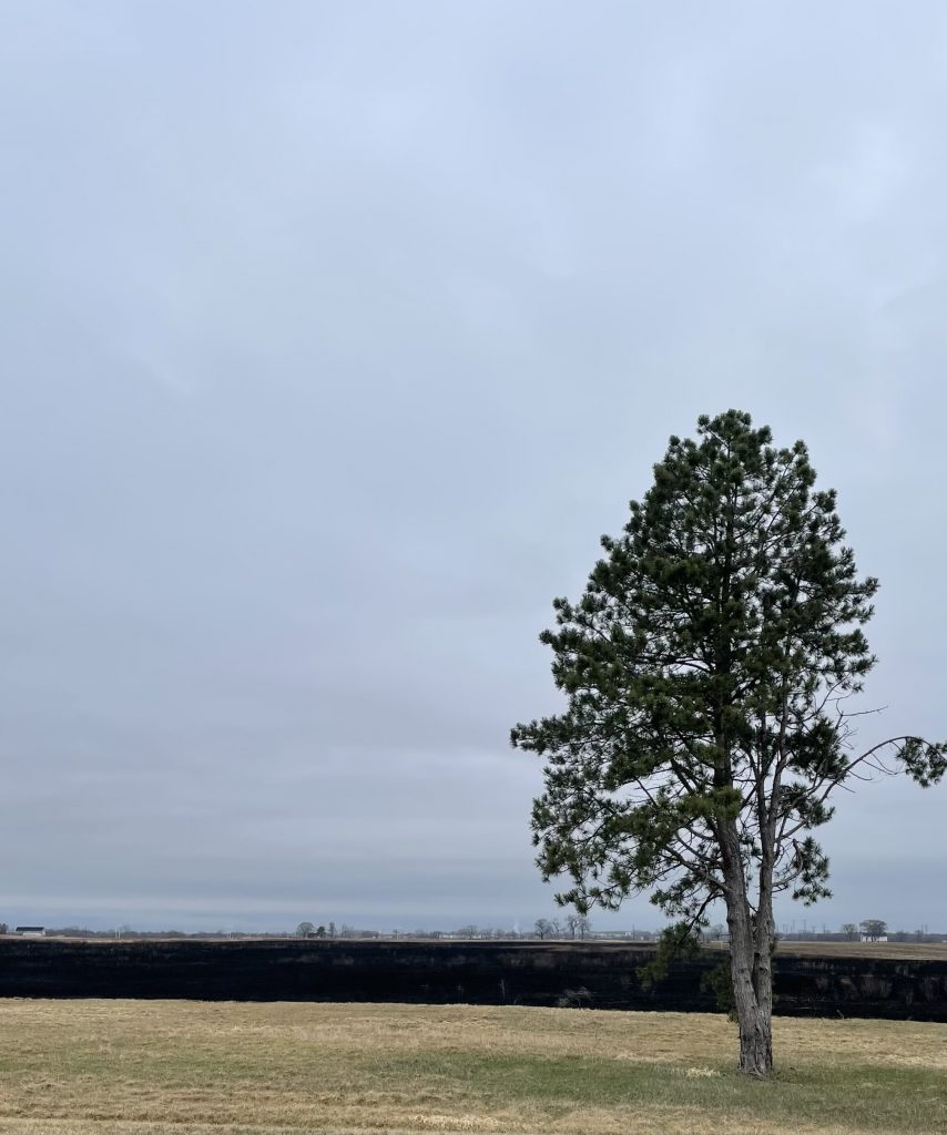 On March 26, 2021, a single tree stands in front of the site of a recent controlled burn in a field off Batavia Road. landscape, nature, campus, tree, burn, field Photo: Ryan Postel