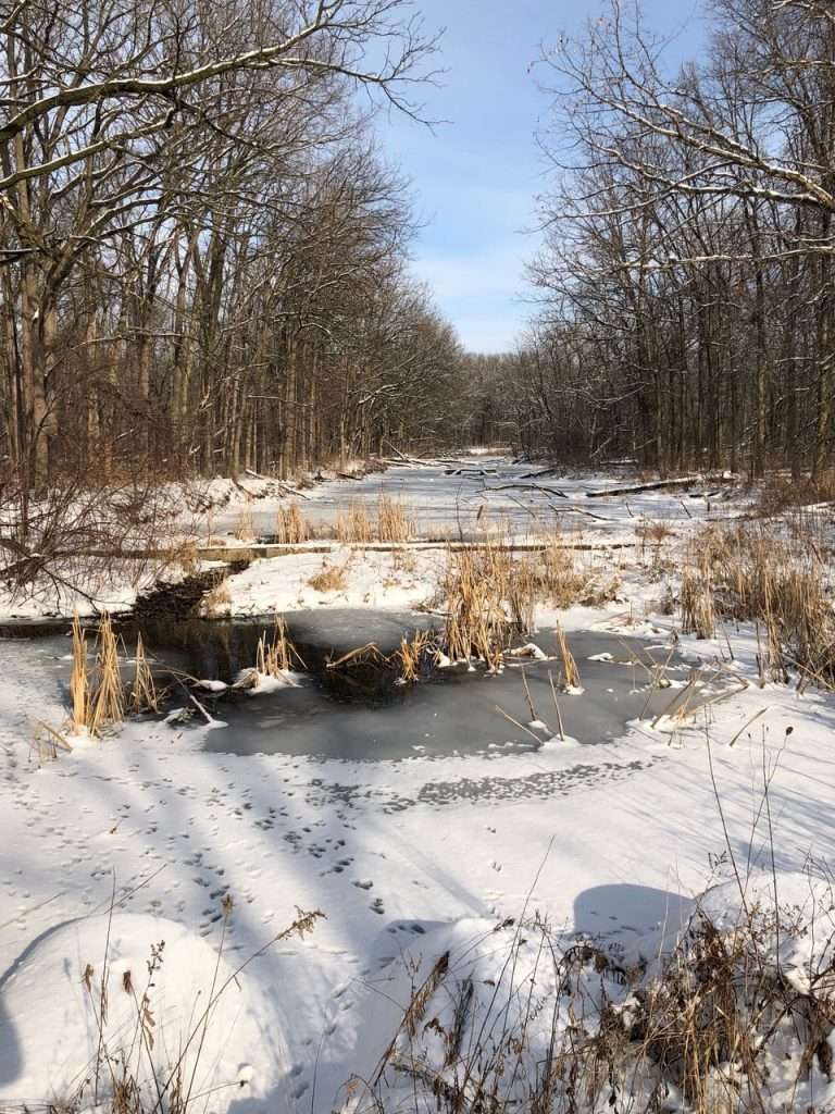 Wintry scene: A snow-laced icy creek cuts vertically through the center bottom half of this photo. Grasses poke out of the ice, blue skies above.