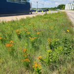 """Jutting out from the left: a blue building with signage """"IARC."""" Behind, blue skies, white clouds, and a parking lot and cars. A bit of Wilson Hall is visible. Front and center, extending to the midground, a median full of grass and flowers."""
