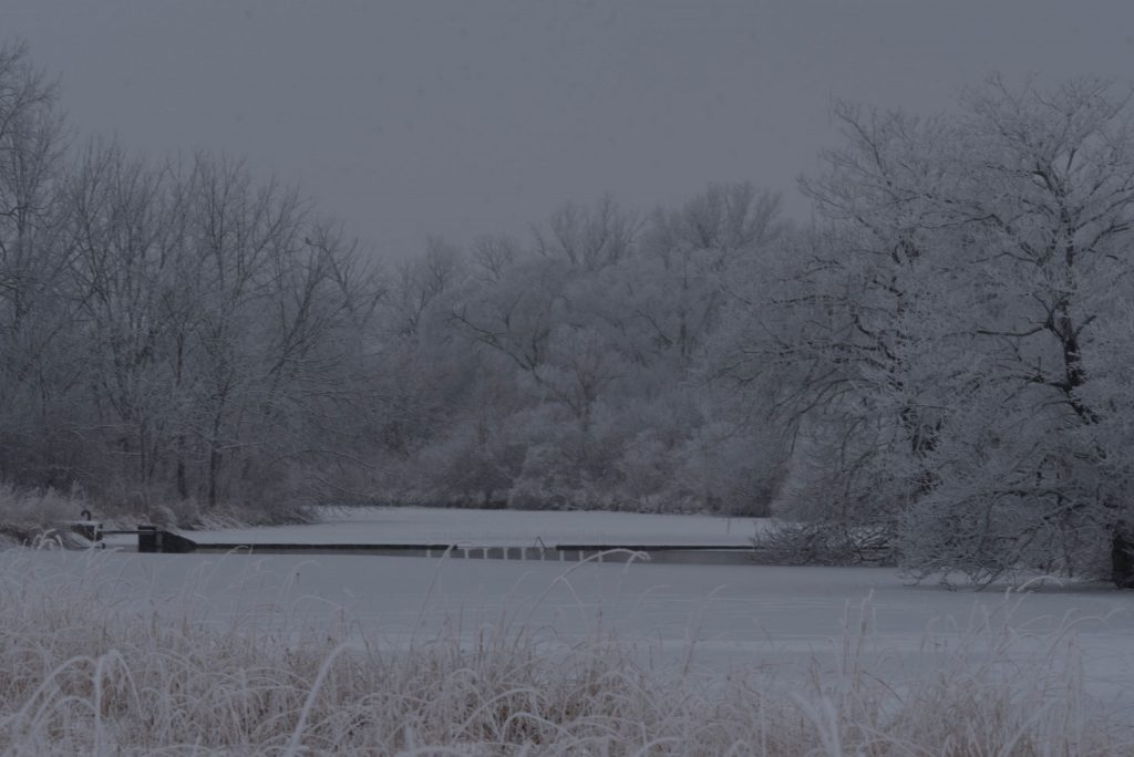Dim, gray sky, bare trees dusted in hoarfrost or snow, same for the ground, maybe a body of water, below. Tan grasses in the foreground.