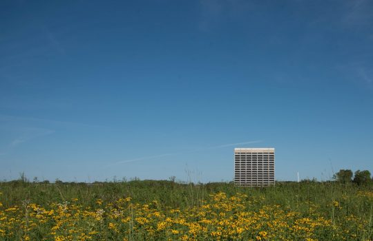 A large meadow of yellow flowers on green stems fills the bottom third of the photo. A 16-story concrete building sits in it on the right side near the horizon. Above it, blue skies.