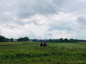 In this photo, a red tractor moves through tall green grass, presumably mowing. A sky full of white clouds above, treeline in background.