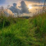 Grassy path in foreground, gray-blue clouds and yellow hazy sun above in background.