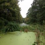 An algae covered water way with lots of greenery and trees surrounding.